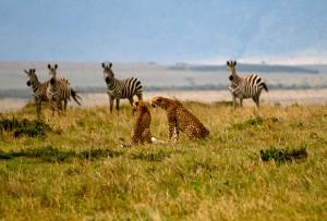 Ксенофобия в мире животных Фото: davida3 / Flickr